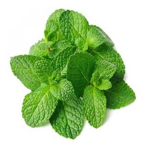 Mint Leaves/Fudina